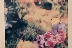 'Garden, 3 of 5', Collage on Polaroid, 11 x 9 cm, 2019