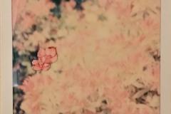 'Garden, 4 of 5', Collage on Polaroid, 11 x 9 cm, 2019