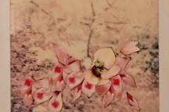 'Garden, 5 of 5', Collage on Polaroid, 11 x 9 cm, 2019